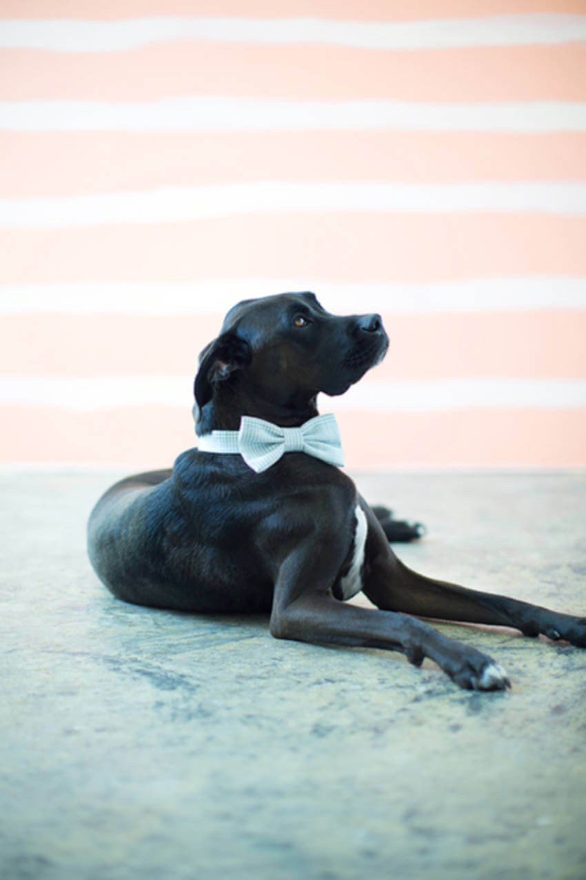 A fancy dog for the holiday photos.