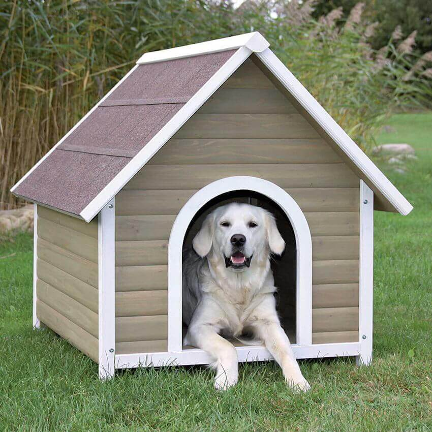 Home exterior: If you have to leave your pets outside during the summer, make sure they have a shady spot to keep cool.