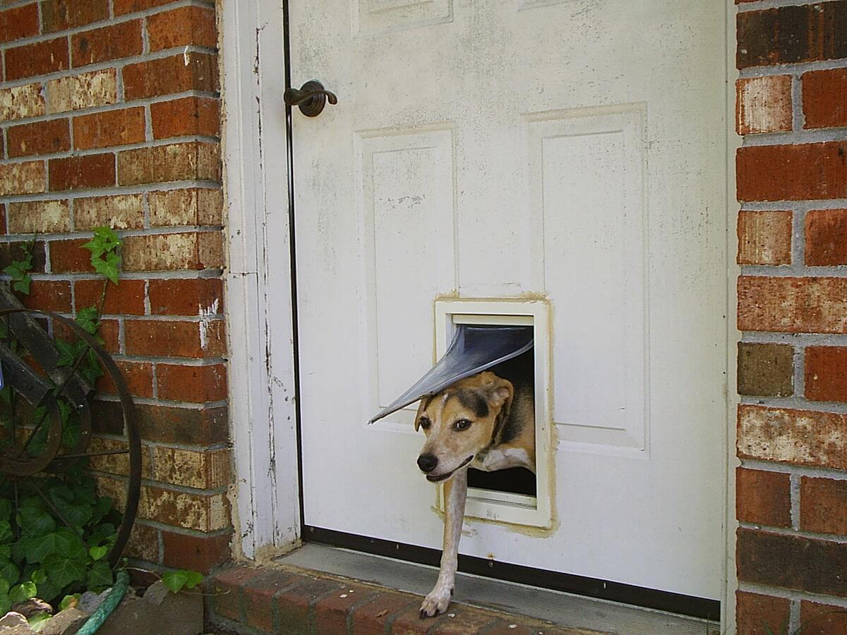 Build a little escape hatch for your doggo
