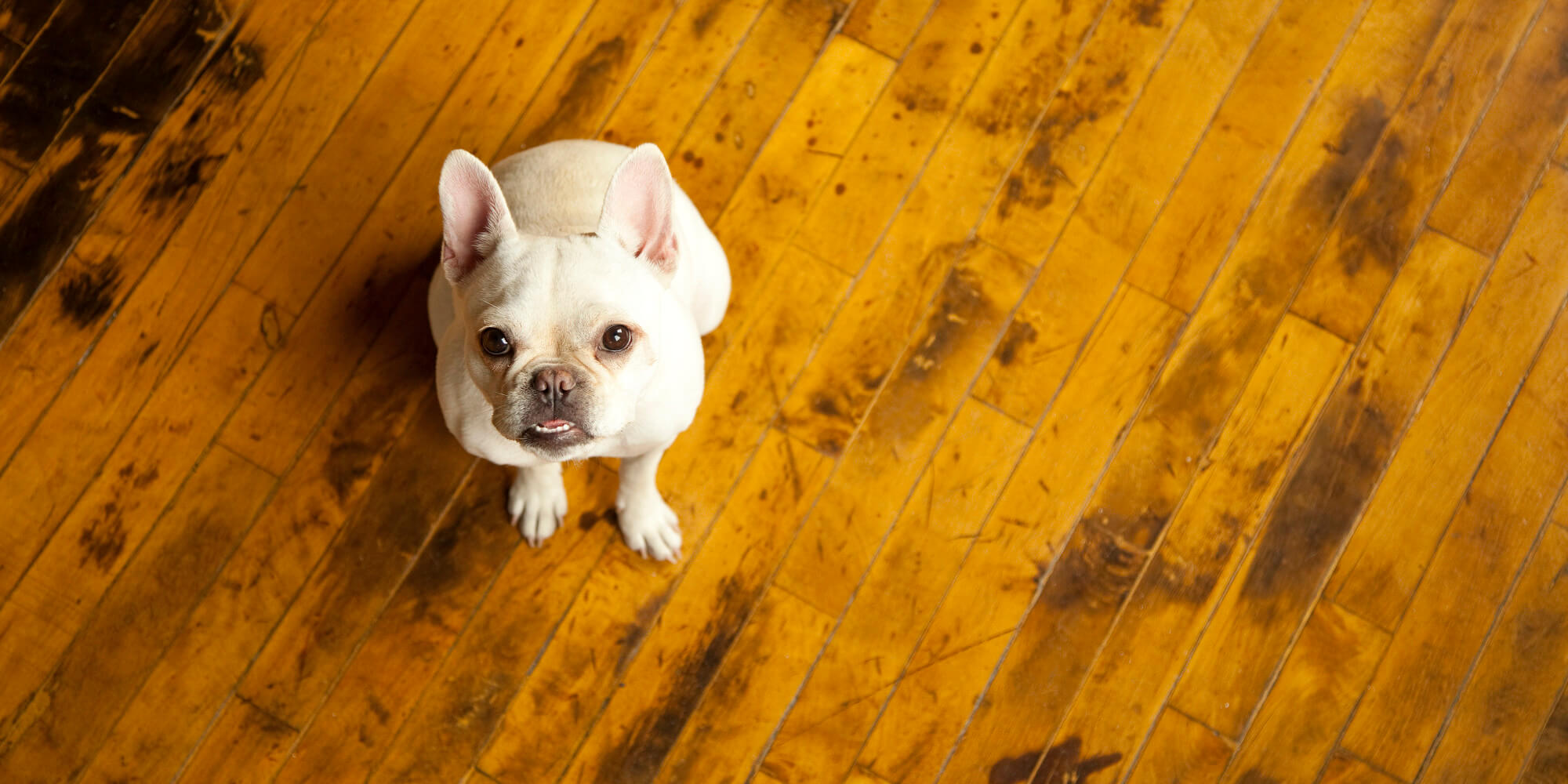 Even your beloved doggo can cause flooring issues.