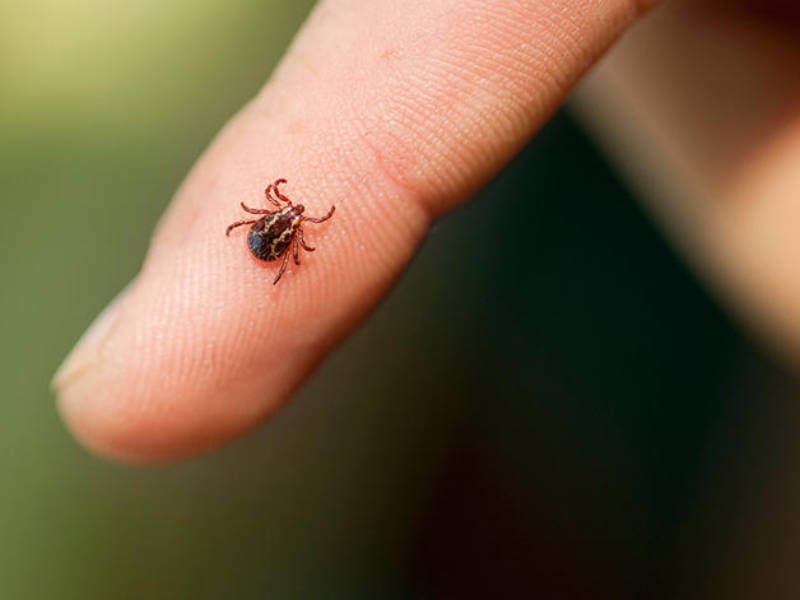 This Is How to Get Rid of Ticks This Summer