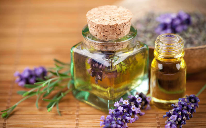 The sweet smell of lavender deters not only ticks, but many other kinds of insects.