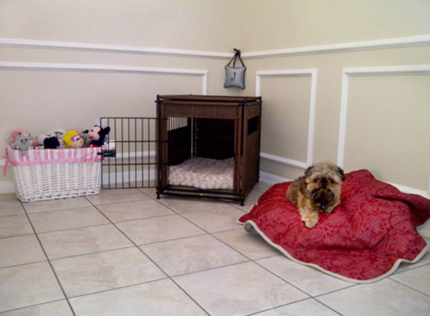 Create the perfect area in your home for your puppy!
