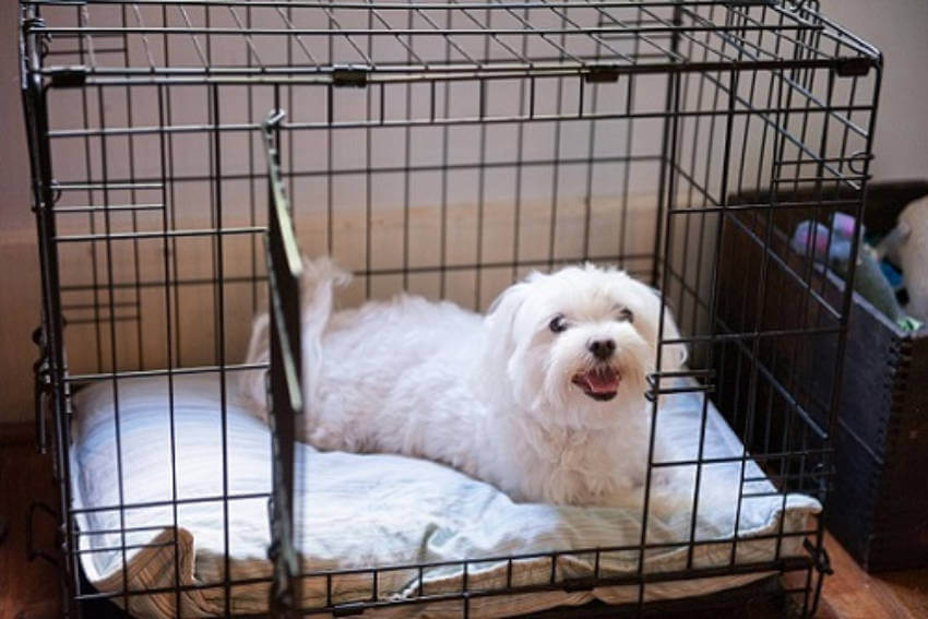 A crate is the perfect safe space for your puppy even when you're not around!
