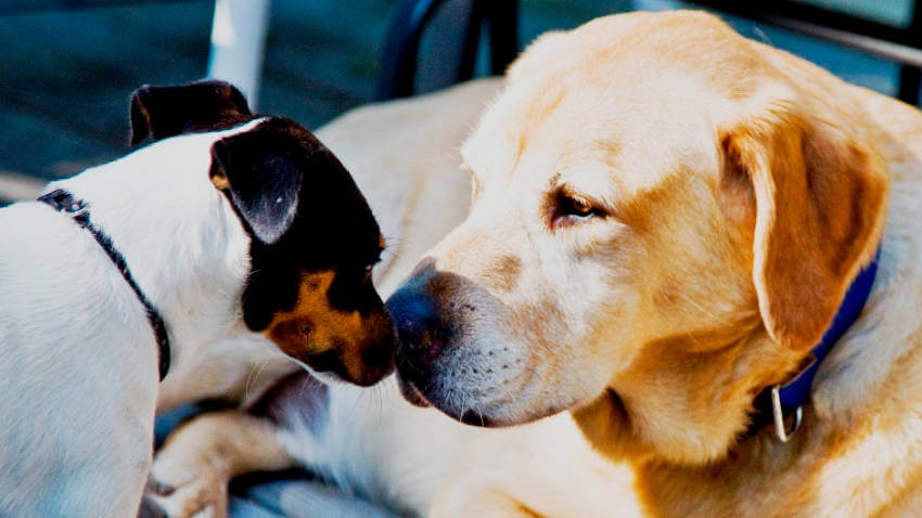 It's important to be around when your puppy is getting to know your other pets!