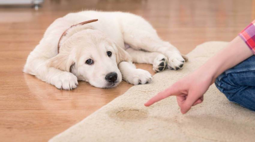 Prevent accidents from happening by training your puppy since day one!