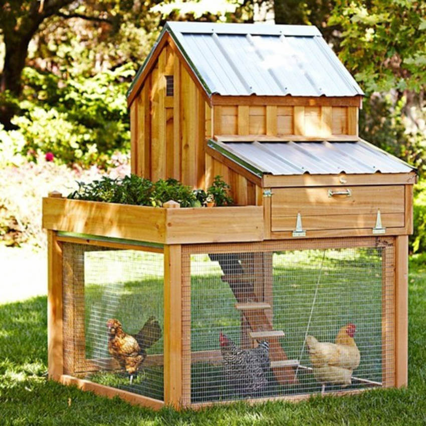 Build your own chicken coop at home to make it the best place for your chickens!