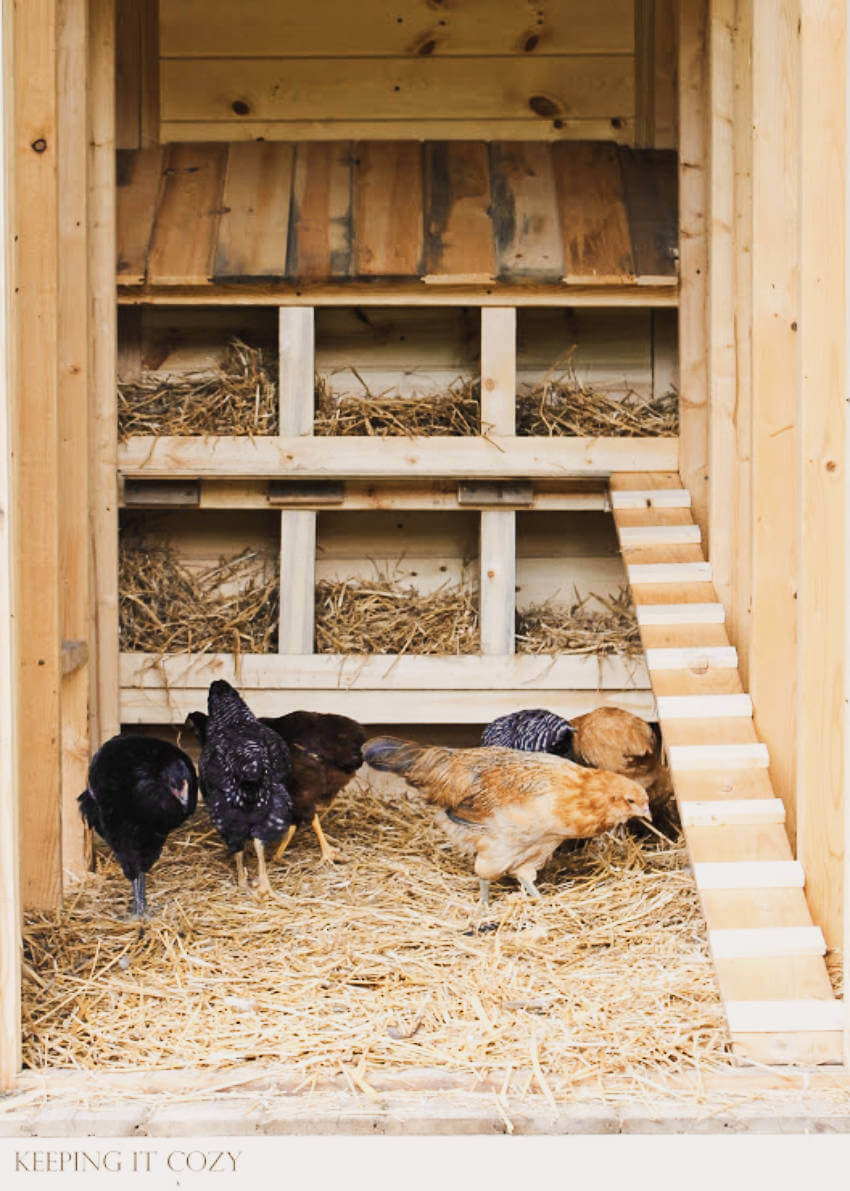 Nest boxes are where the chickens place their eggs!