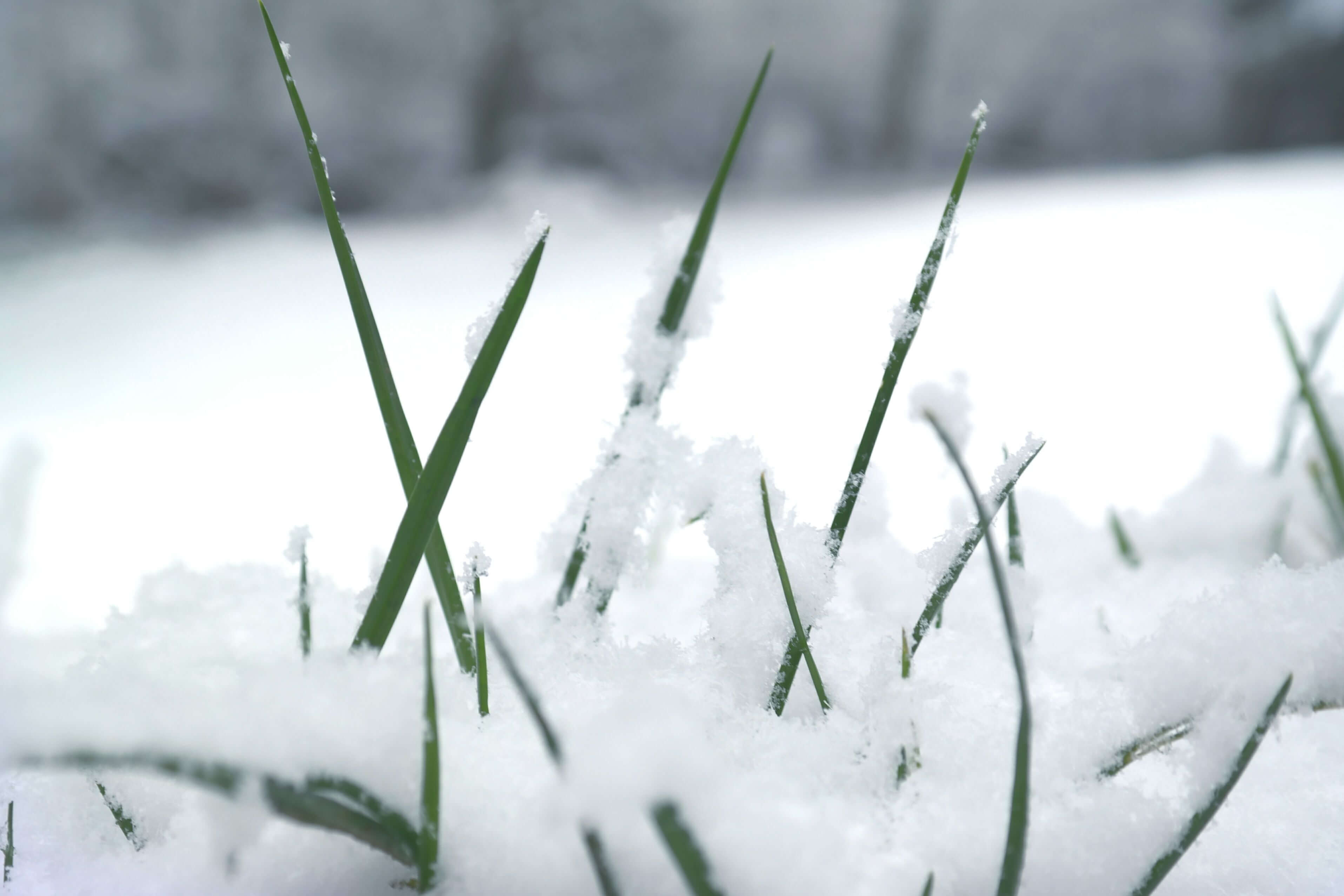 How to best serve your lawn during the colder season