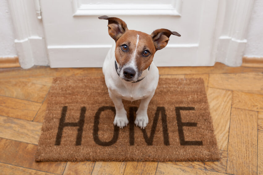 Interior home welcome matt: the right decor for any household pet