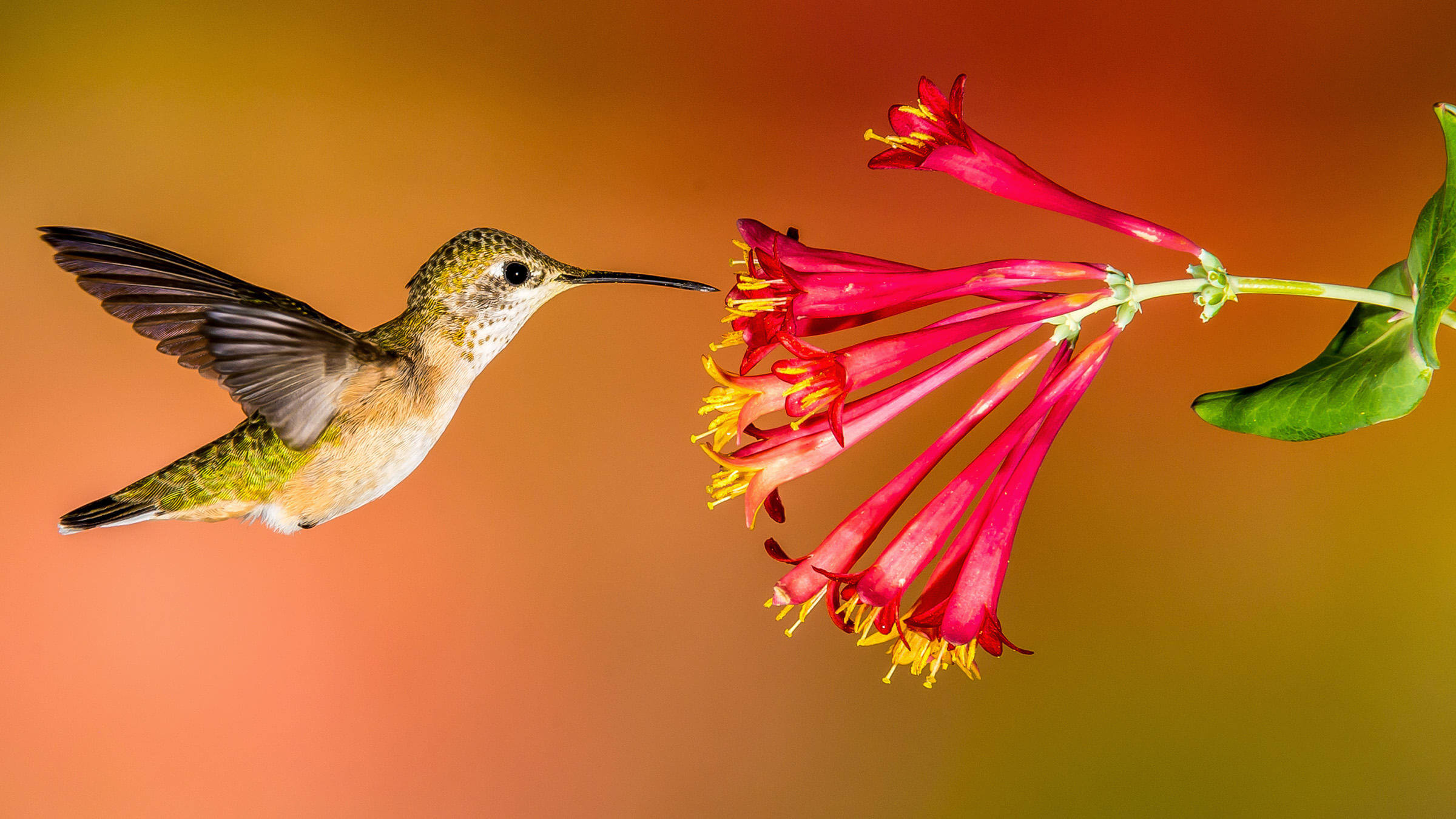 Enjoy the majesty that is hummingbirds