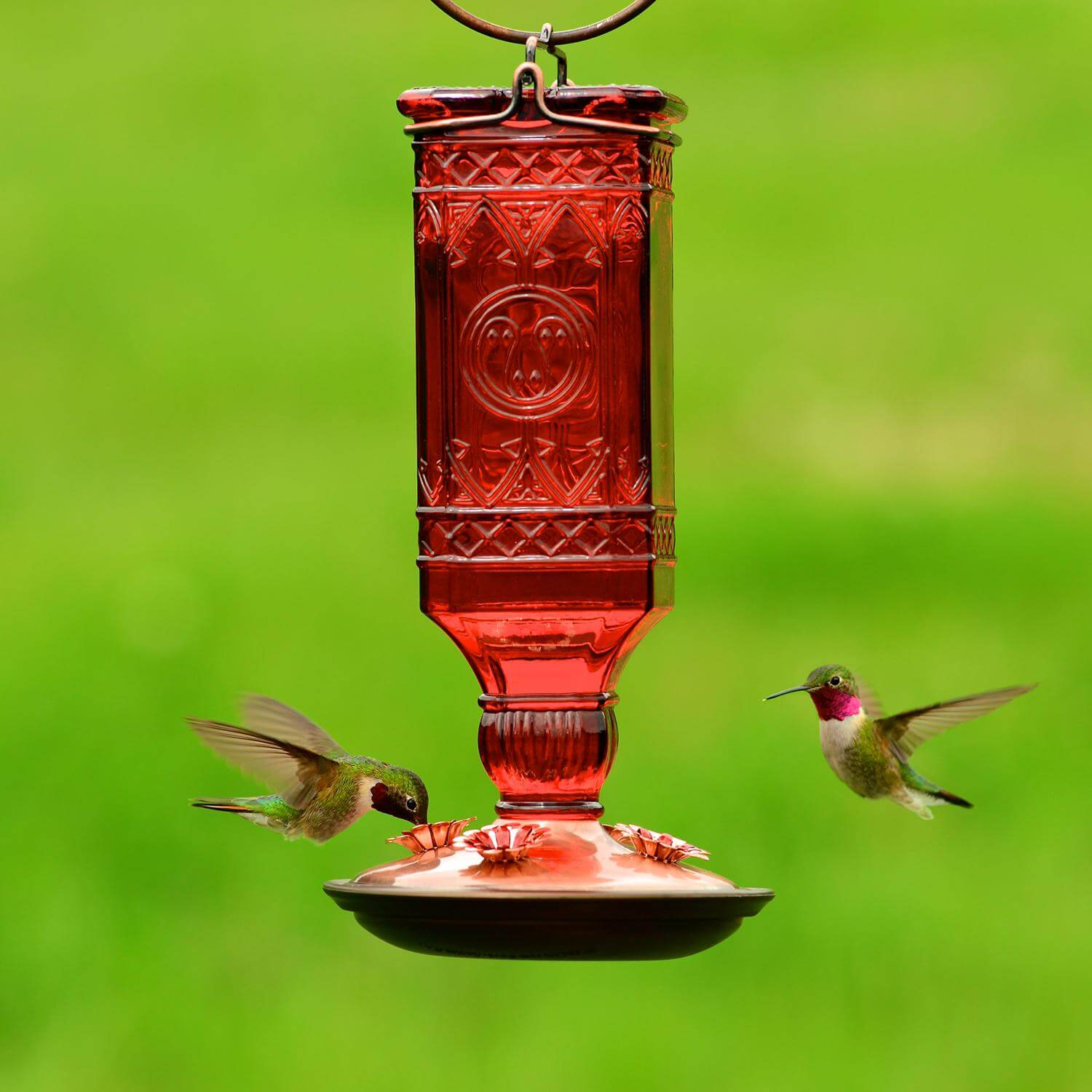 A bird feeder is the first step in making your garden more hospitable towards hummingbirds