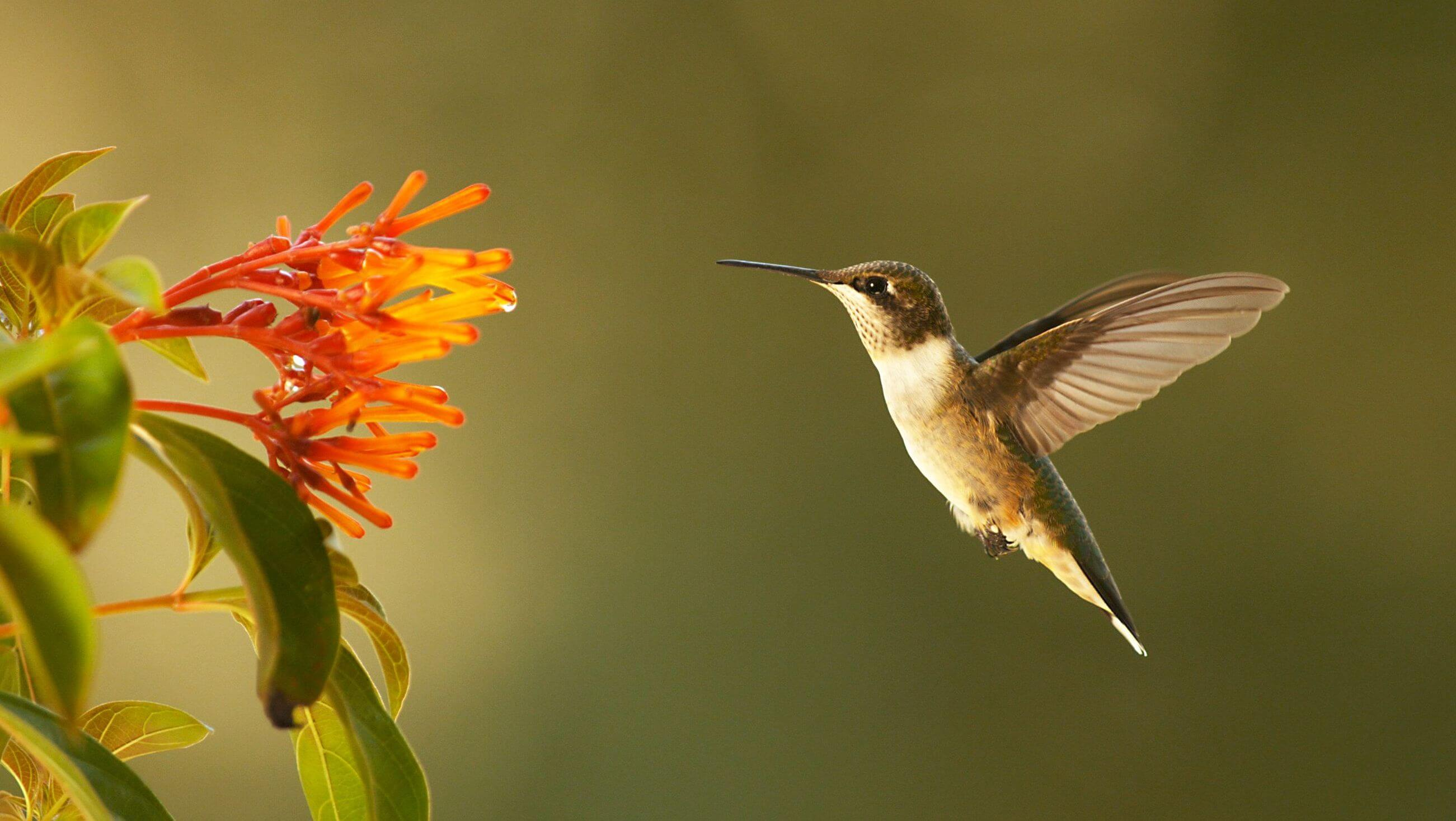 A garden where hummingbirds can be happy is all you need.
