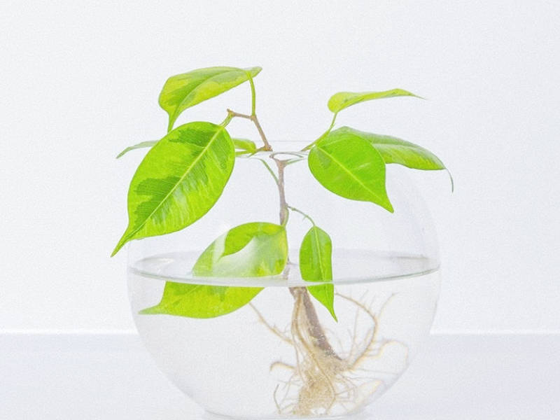 Hydroponic houseplants are easy to look after!