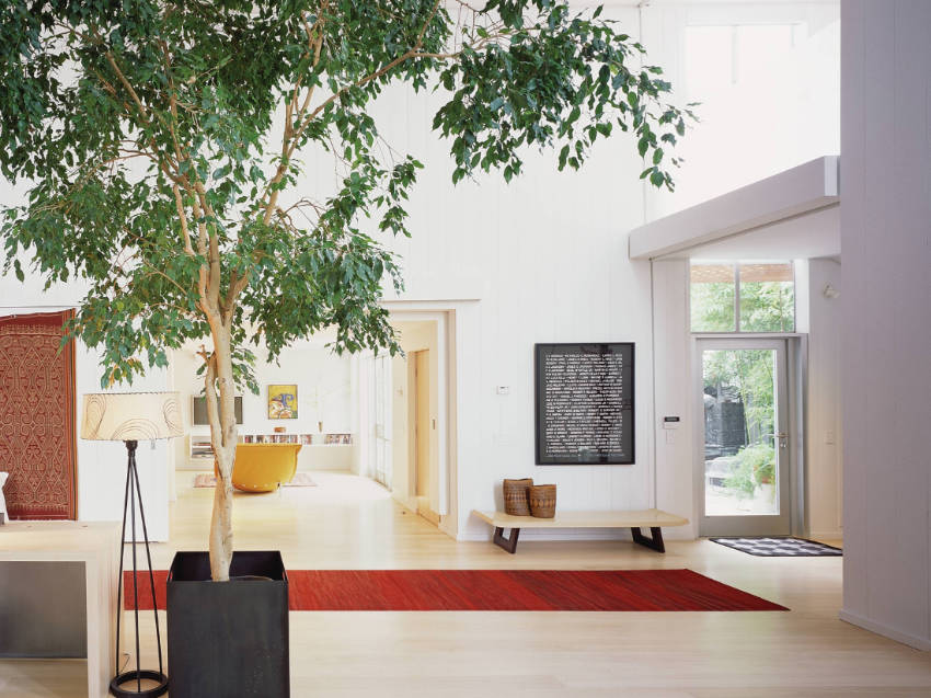 12 Beautiful Indoor Trees That Will Brighten Up Any Room