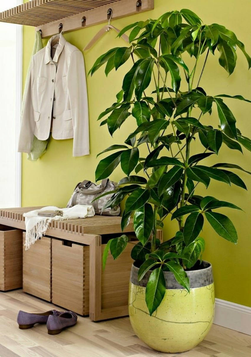 A bunch of awesome indoor trees that you will love!