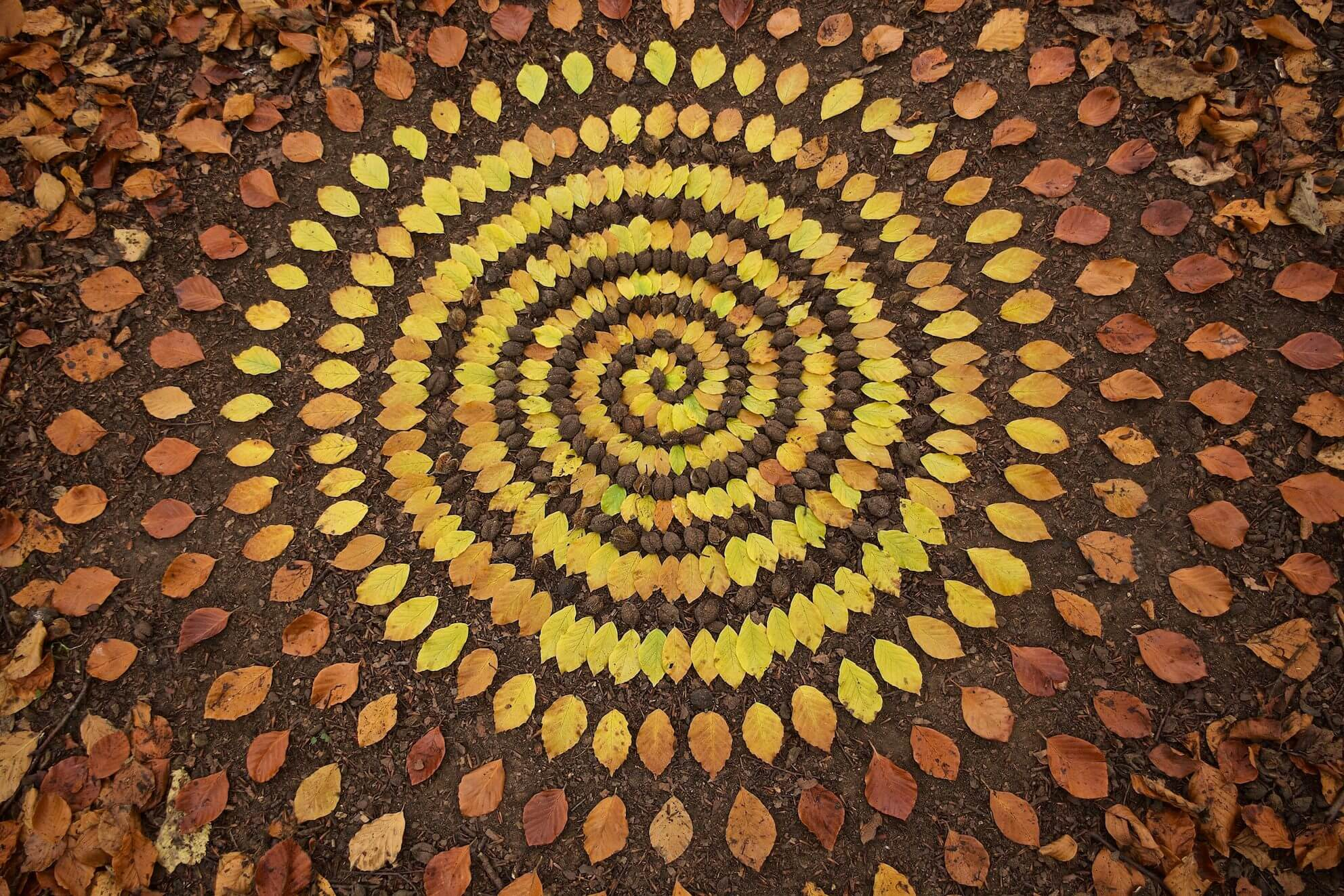 Even spiraling leaves can look like a work of art
