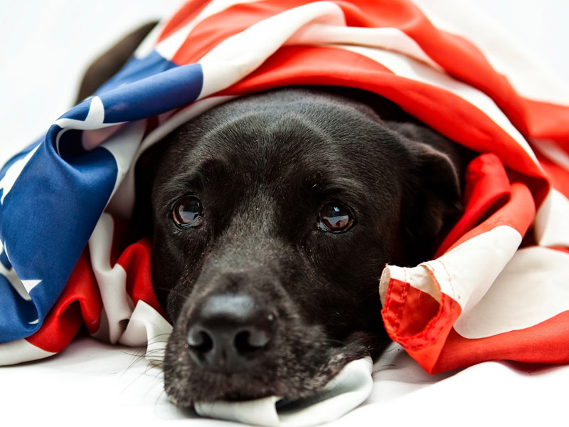 How to Keep Your Kids and Pets Safe This 4th of July
