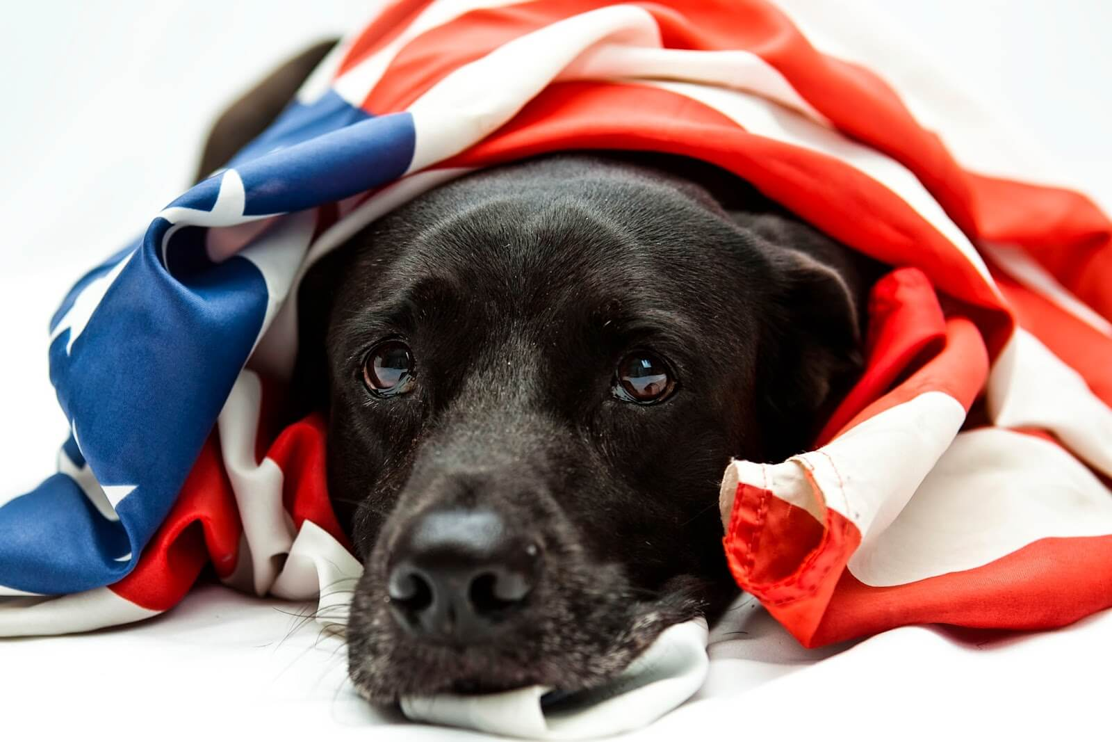 This poor pupper is patriotic, but petrified of fireworks