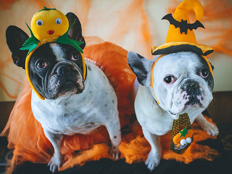 8 Halloween Pet Safety Tips You Need to Follow
