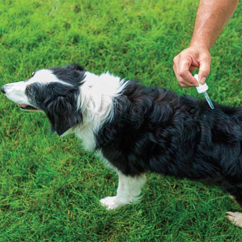 Essential oils are a natural and safe way to keep ticks off your dog!