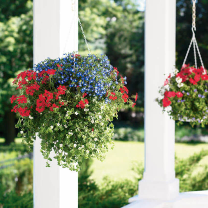 Hanging baskets can beautify any part of your house.