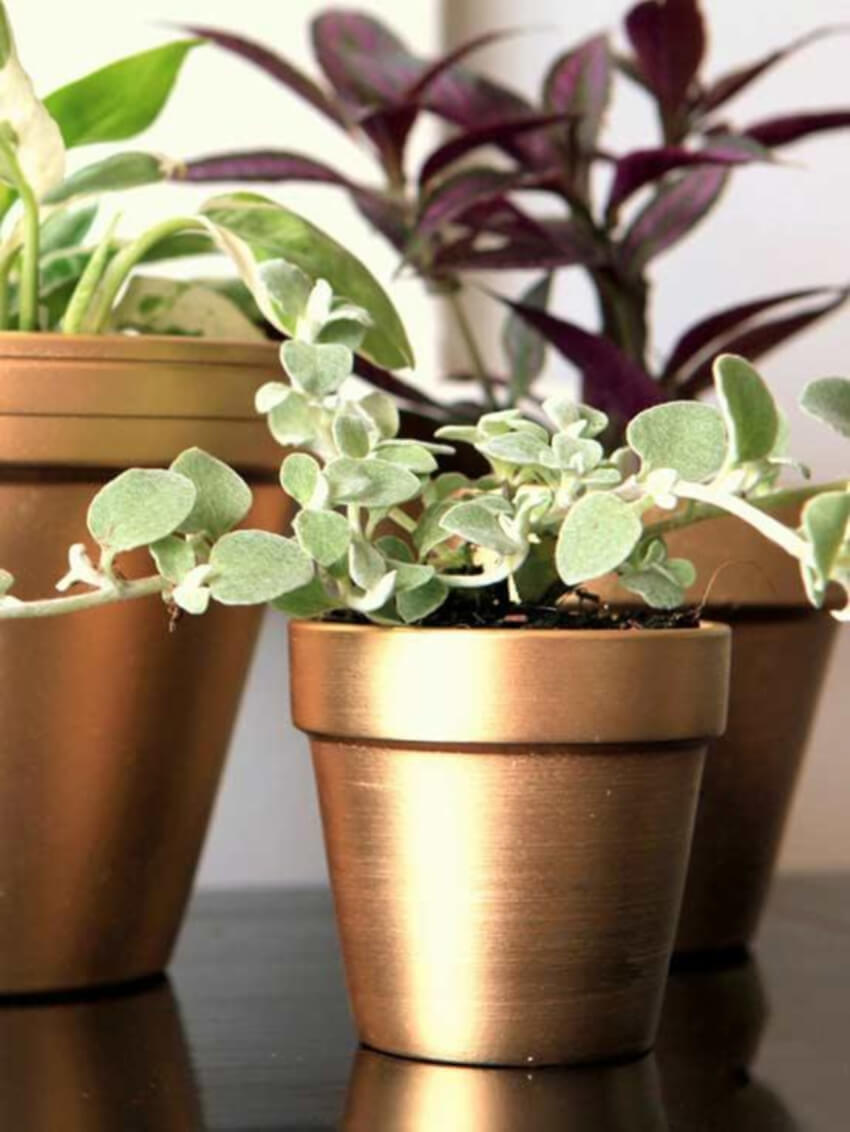 Gold or silver spray paint will make gorgeous terra cotta pots.