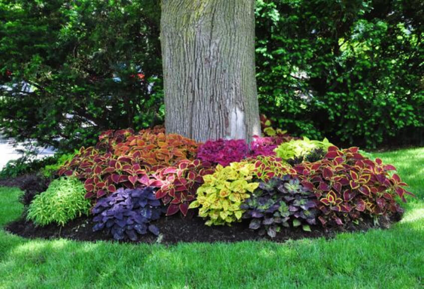 A colorful flower bed to match with spring.