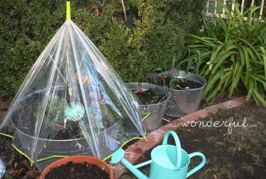 Lawn care DIY: Using umbrellas to cover your veggies is a creative and surprisingly effective solution.