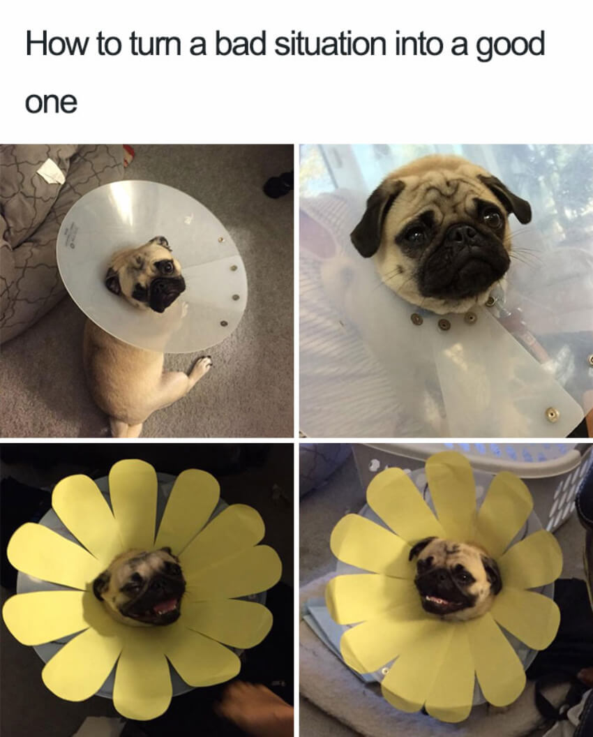 Pets and their ability to brighten up our days…
