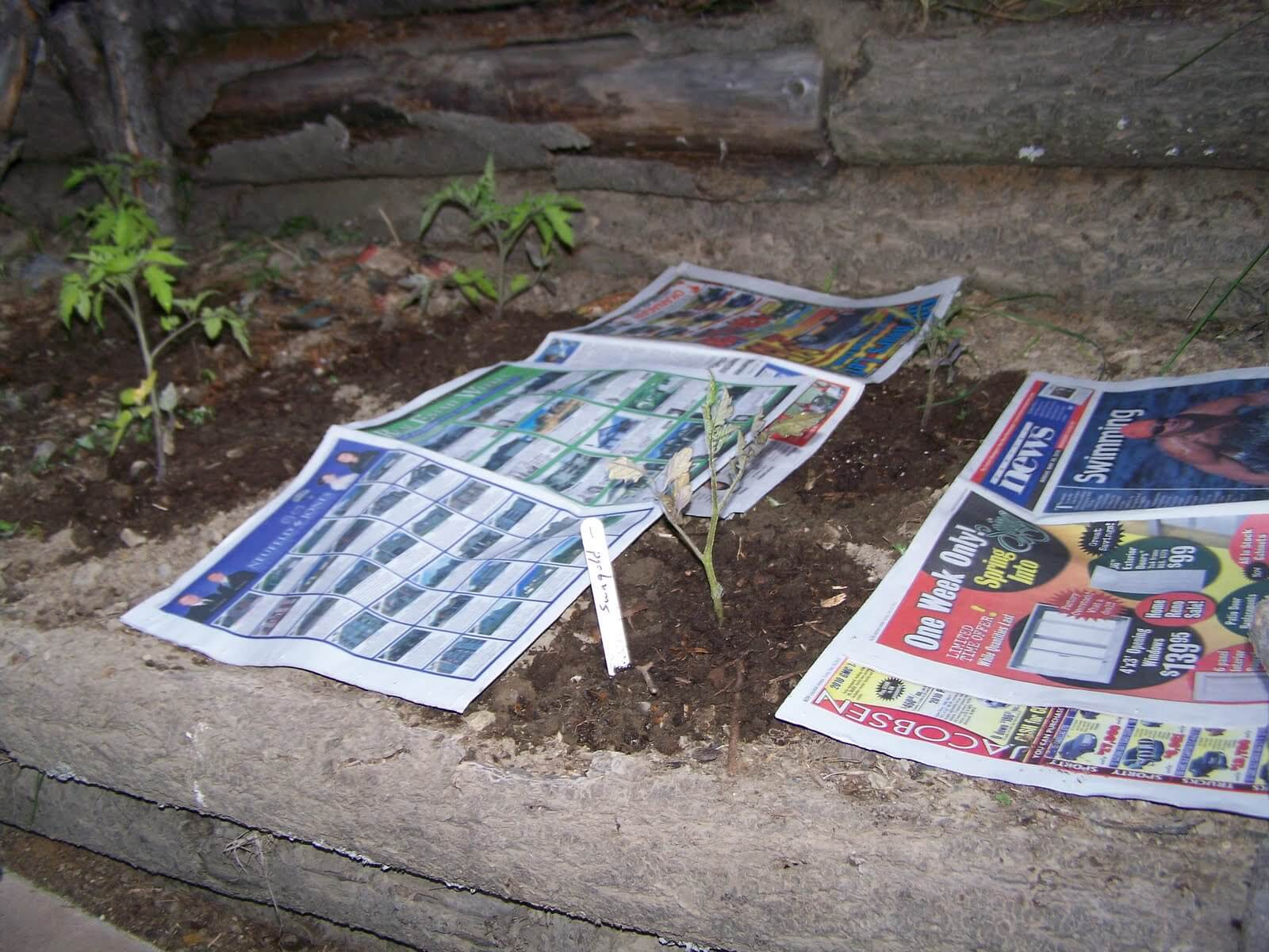 Smothering the weeds with newspaper is an effective and cheap method
