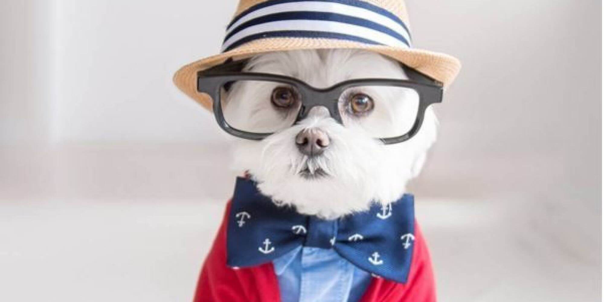 Hipster dog went to the cafe before it was cool