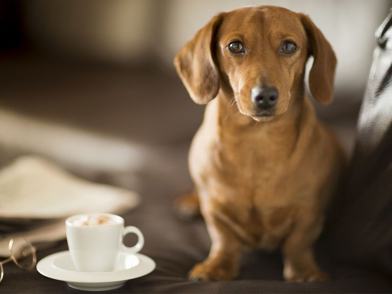New York is Finally Getting a Dog-Friendly Cafe