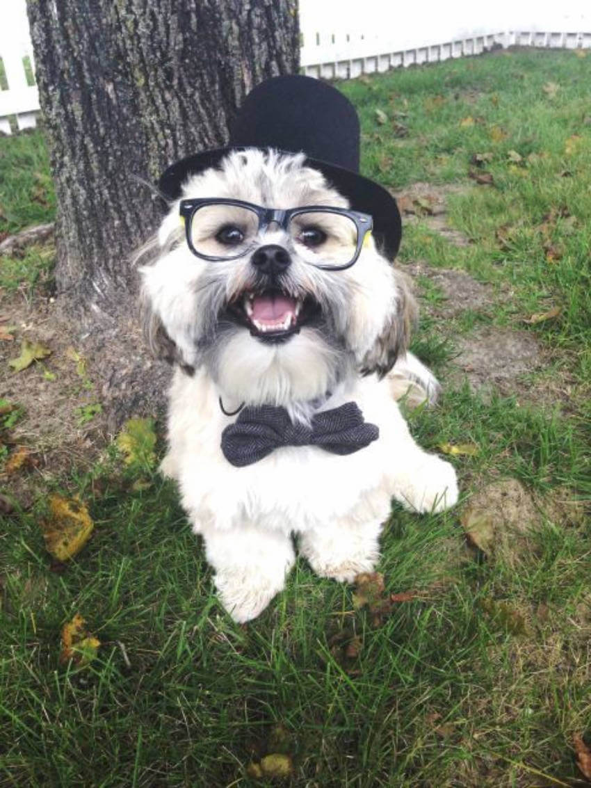 This dog is such a gentleman with his little hat, bowtie, and glasses!