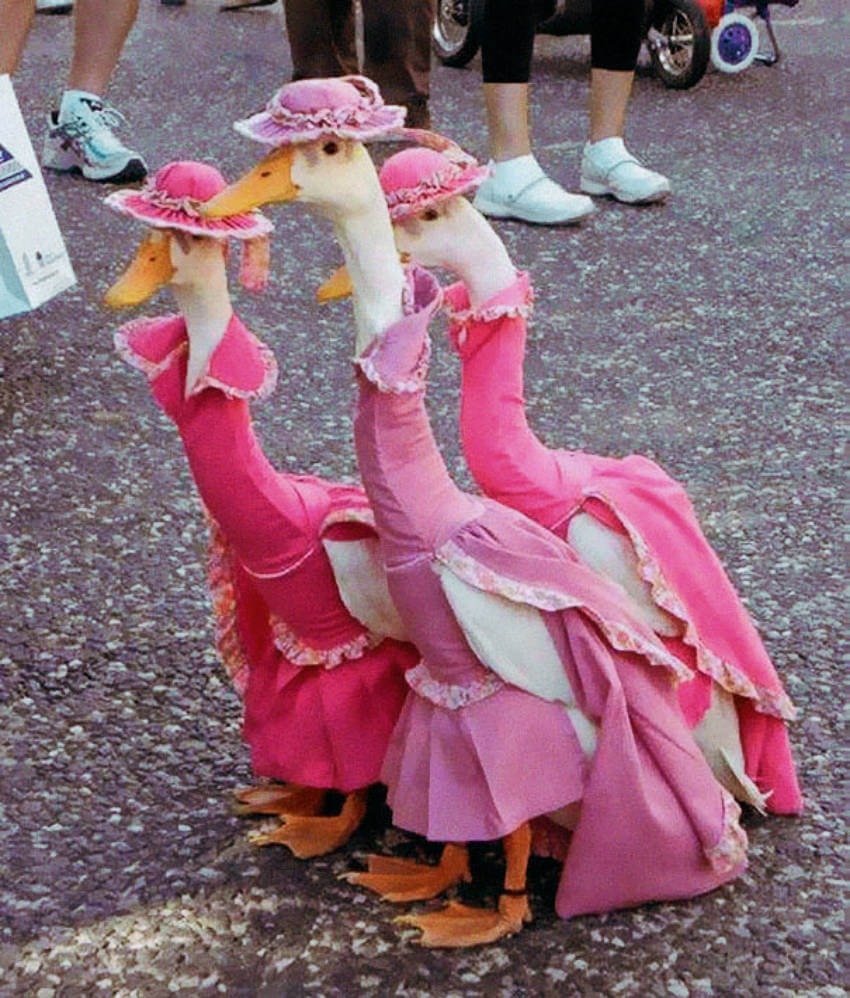 These geese are so classy dressed up like ladies!