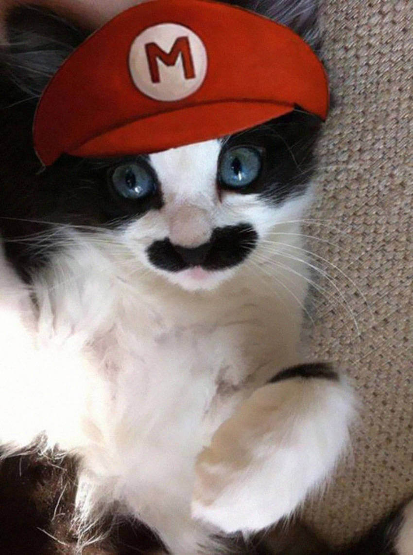A cat dressed up like Mario, is it the best game ever or what?