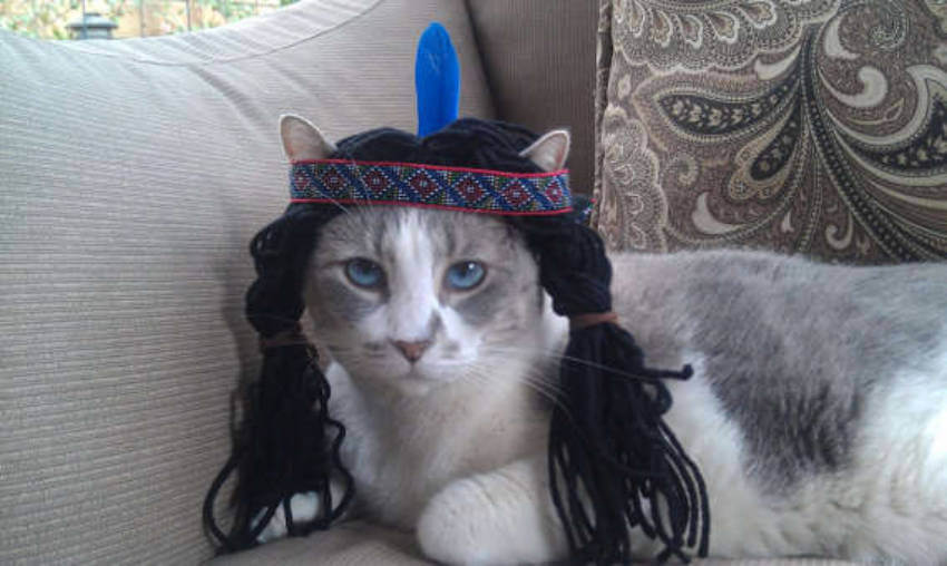 A pocahontas cat, that's a new thing for sure!
