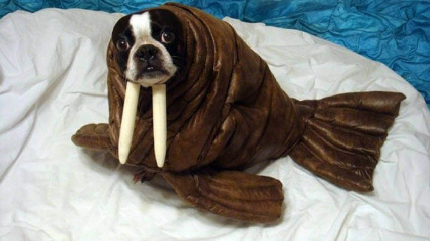A dog dressed up like a seal is the image of the year!