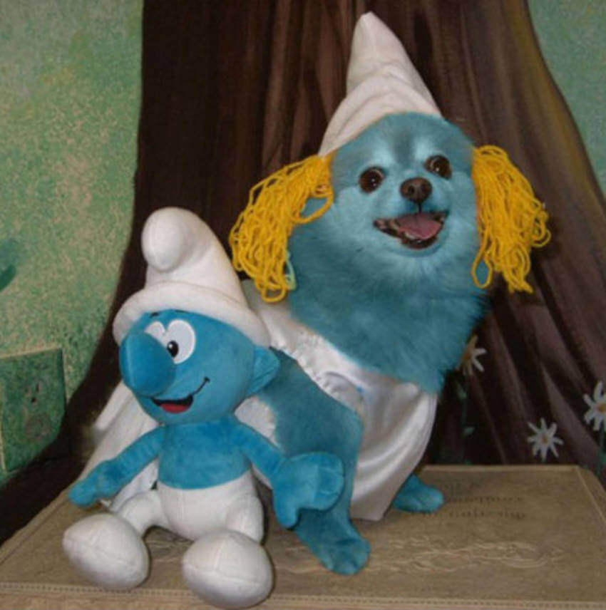 I wonder if this smurf costume will ever come off this dog!