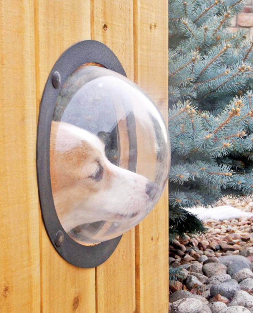 What Is a Pet Peek Fence? (And How You Can Make a DIY One