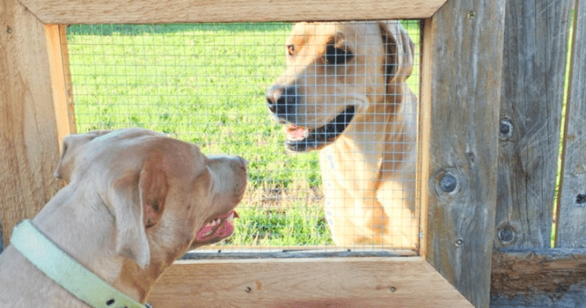 Dogs are sociable and need to see what's happening on the other side!