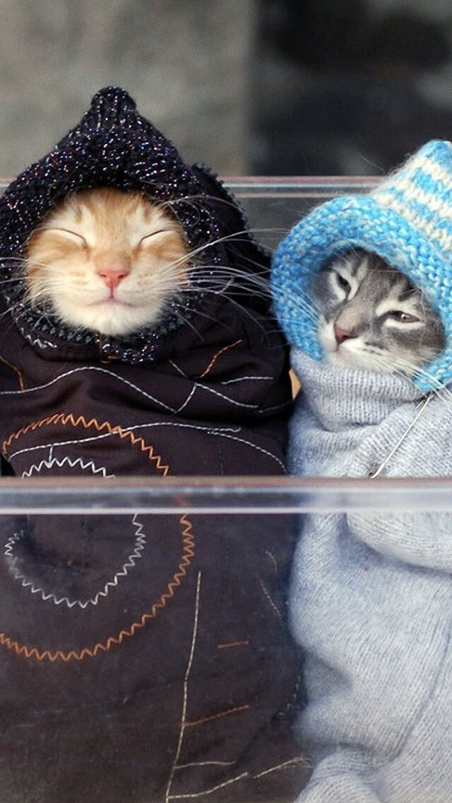 These cats look so cozy!