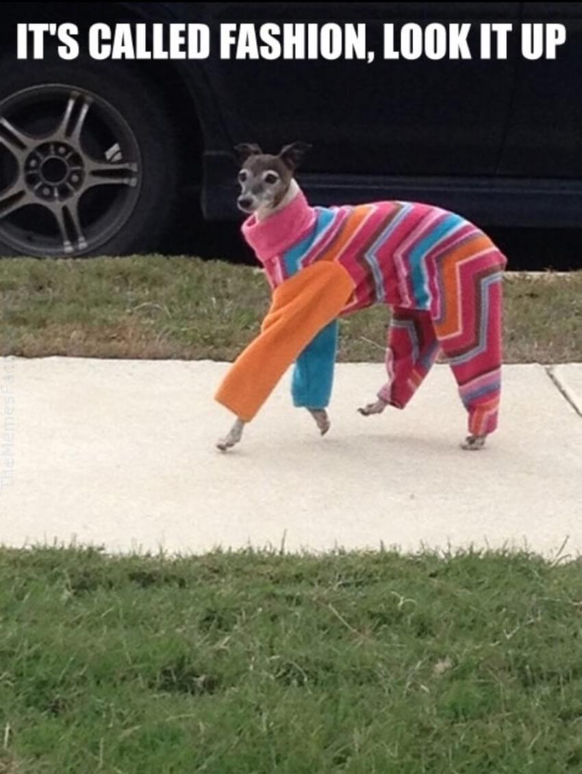 Ready for the catwalk, er...dogwalk?