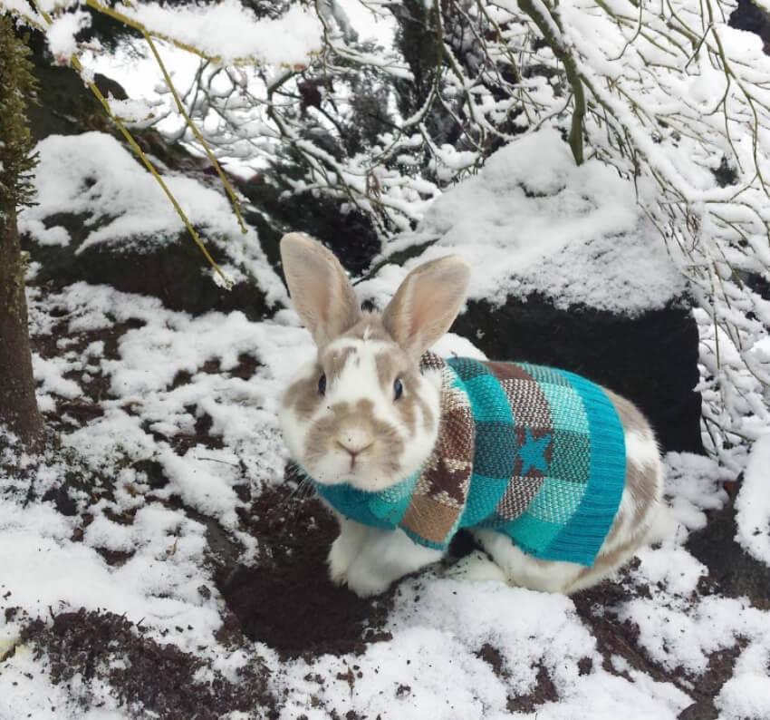 Trendy sweater, adorable bunny!