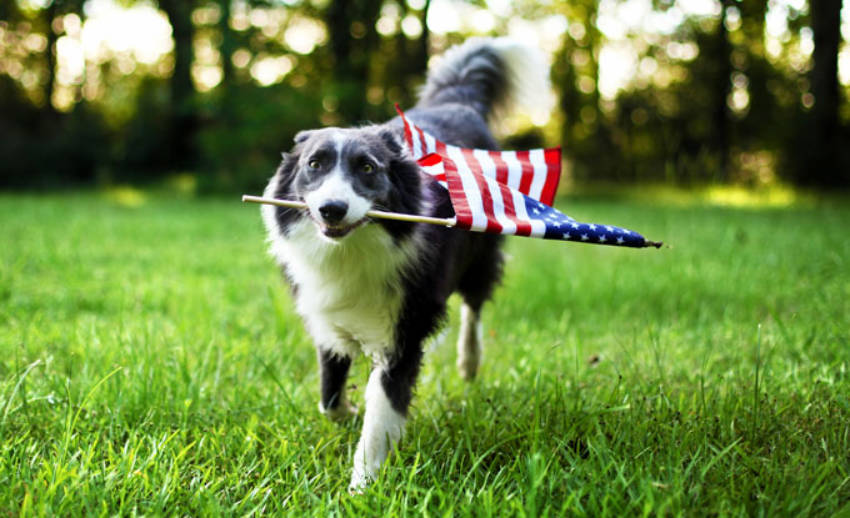 how to protect your pets during 4th of July fireworks