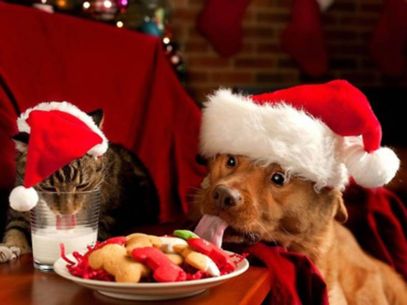 10 Pets That Can't Wait for Christmas Day
