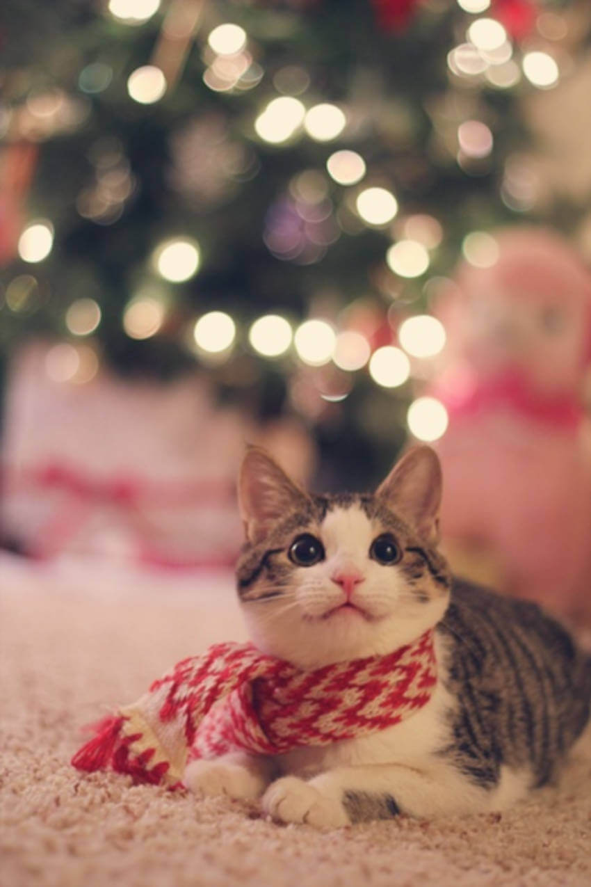 This cat cannot wait to open Christmas gifts!