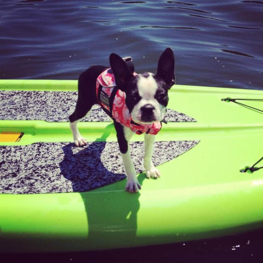 These 10 Pets Ready For Summer Will Make You Smile