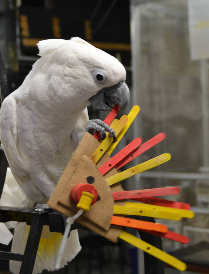 This parrot can craft good!