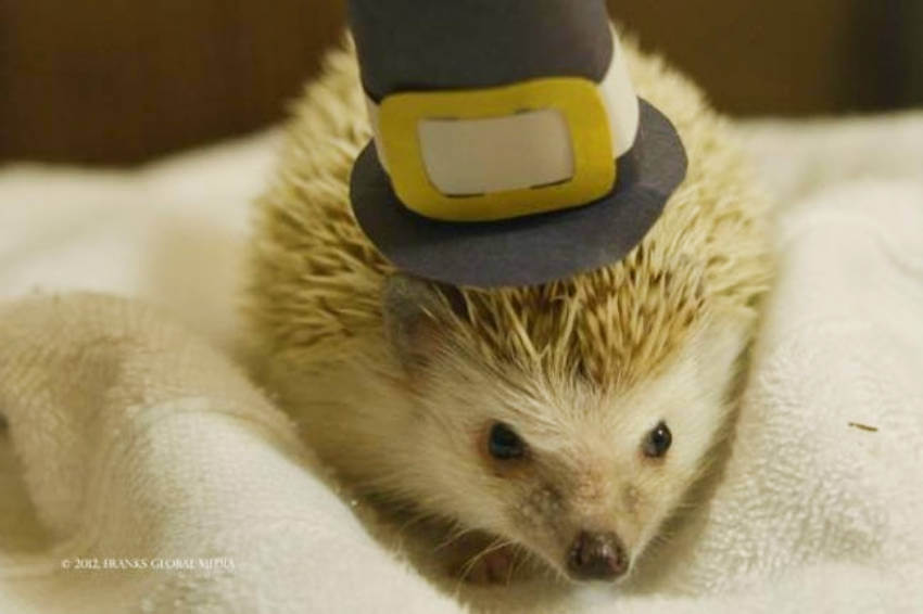 Hedgehogs are too adorable to handle!